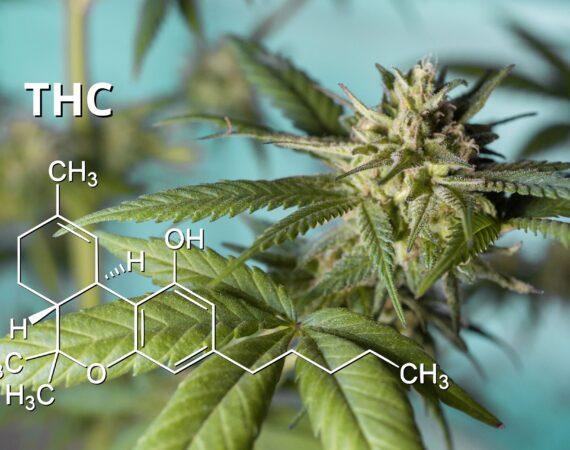 Traficul de droguri de risc și limita autorizată de 0,2 % THC